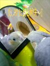 Julie3_41